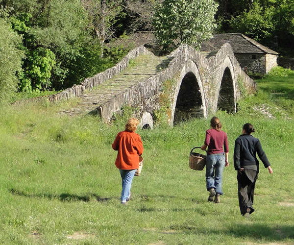 TRACE YOUR ECO Thematic walks. Together with mountain guide Stelios Tsialikis, we organize personalized walks and hikes around Zagori